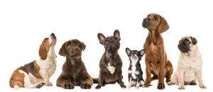 10 Falsos mites sobre els gossos