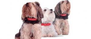 El collaret intel·ligent per a gossos es diu Kyon Pet Tracker