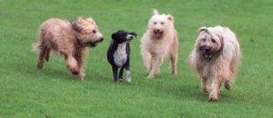 El Pipicà ha de ser per al benestar dels gossos