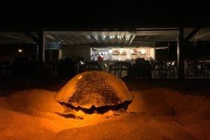 Tortuga marina- Mataró