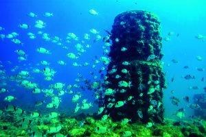 biòtop submergit al mar i envoltat de nombrosos peixos