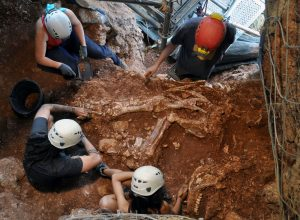 Investigadors examinen l'esquelet de rinoceront localitzat a Castelldefels.
