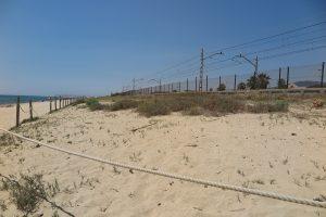 Vegetació dunar platja Vilassar