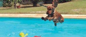 Refresca el teu gos a l'estiu