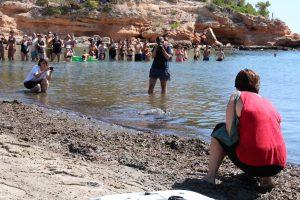 tortuga abaua a l'aigua