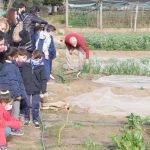 Cultiva't, un projecte de Premià de Dalt perquè els infants puguin conèixer la terra i els seus productes