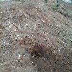 l'Ajuntament de Cabrils denuncia el robatori d'una vintena d'arbres recentment plantats