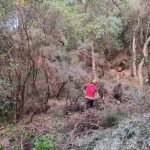 Finalitzades les tasques de gestió forestal del bosc de Can Cabot de Munt de Llavaneres