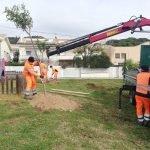 L'Ajuntament de Cabrils inicia treballs de plantació de més de 200 exemplars d'arbres