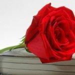 Calella substitueix la Fira del Llibre i la Rosa per parades davant de les floristeries i llibreries que ho han demanat