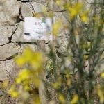 Malgrat de Mar crea el primer 'bosc de papallones' públic a Catalunya