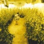 La policia local de Cabrils localitza una plantació de marihuana