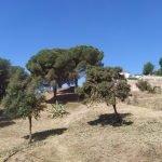 Executen treballs forestals a la Molassa, Sant Berger i Gran Vista de Teià, per prevenir incendis