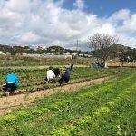 """El programa de formació agroecològica per a joves """"Arrelem"""" enceta la seva segona edició"""