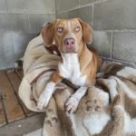 Teià confia la recollida i atenció d'animals perduts i abandonats al CAAD Maresme