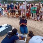Una tortuga fa niu a la platja de la Picòrdia d'Arenys de Mar. S'organitza una xarxa de voluntariat per vigilar el lloc durant 60 dies
